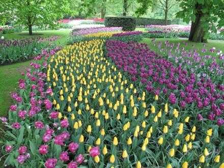 世界一大きなの花の庭園キューケンホフ。