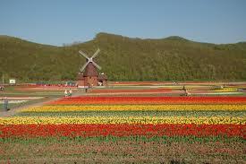 オランダとチューリップ。  キューケンホフ庭園とチューリップ・バブル崩壊の歴史。