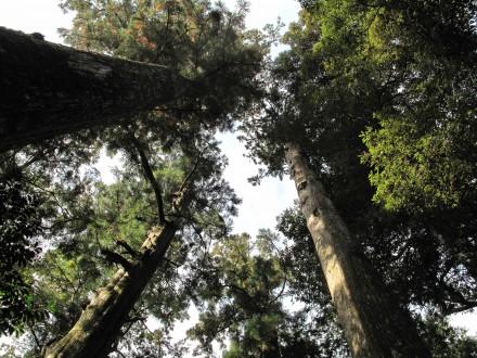 木と気のパワー。
