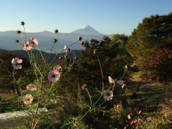 富士山が見えると、単純に嬉しい。